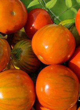 Баклажан оранжевый, белый...