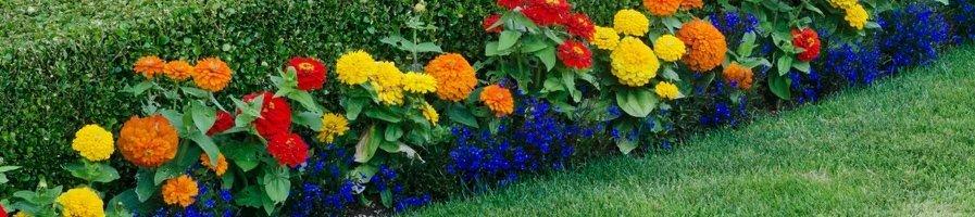 Цветы низкие