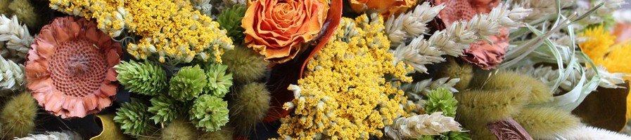 Злаки и сухоцветы