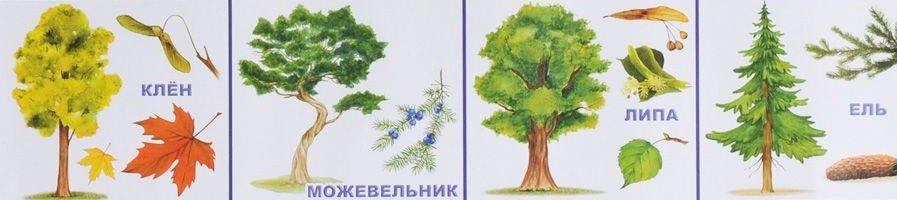 Семена деревьев и кустарников