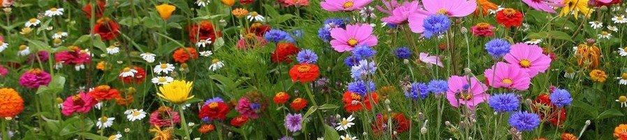 Цветущих газоны