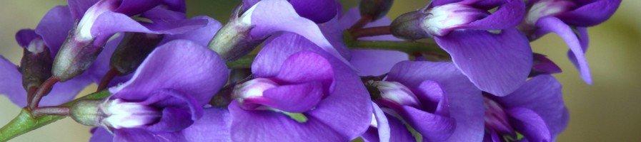 Цветы душистые