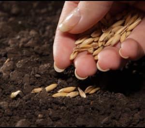 Сажаем семена правильно