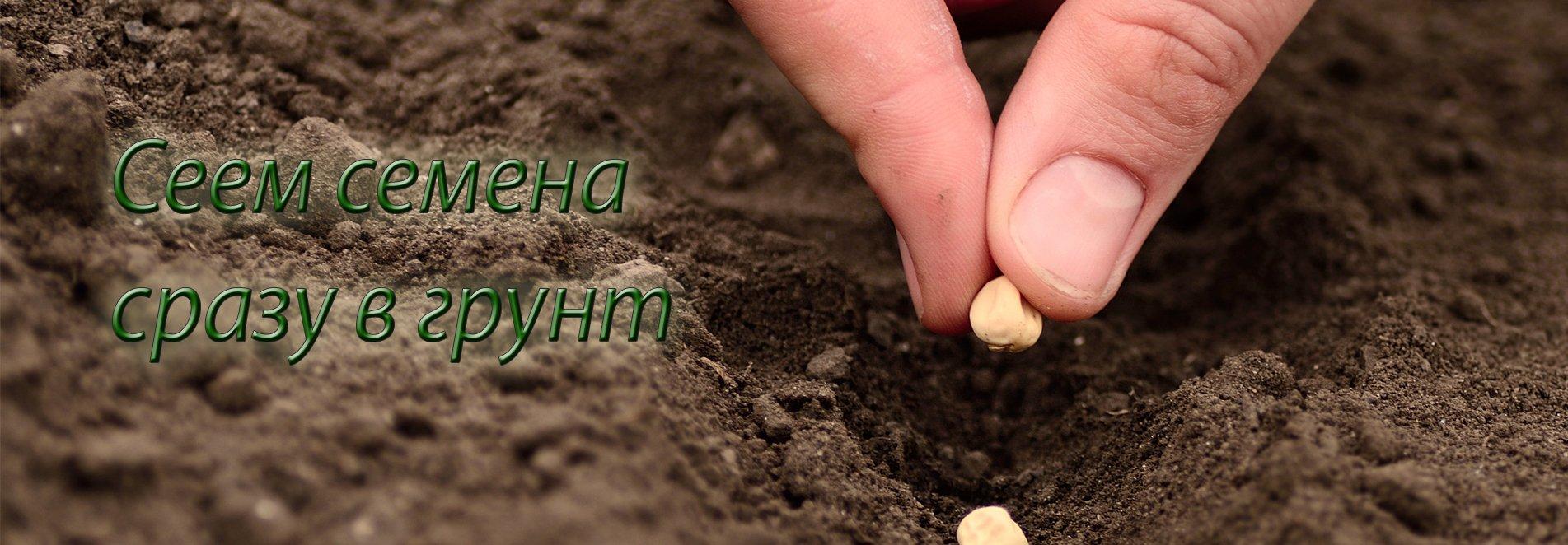 Семена сразу в грунт